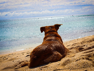 10 TIPS TO KEEP YOUR DOG SAFE AT THE BEACH