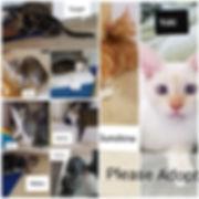 9 kittens.jpg