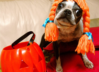 HEALTHY HALLOWEEN TREATS FOR YOUR SPOOKY POOCH OR CREEPY KITTY