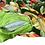 Thumbnail: Aloha Bed - Black Pau Hana Cover