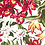Thumbnail: Cream Birds of Paradise Collar & Leash