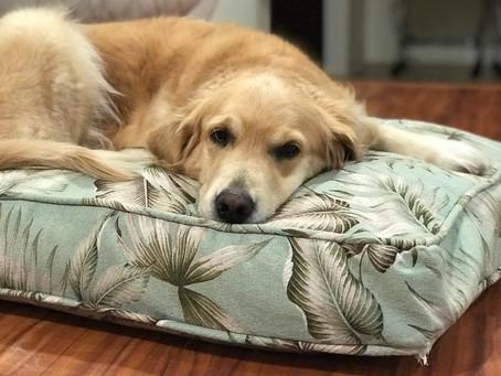 カルビン&スージー・オリジナルベッドに横たわるSophie