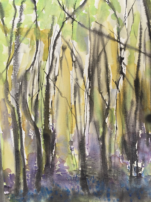 Morning Light through Bluebell Woods by Anne Lynch