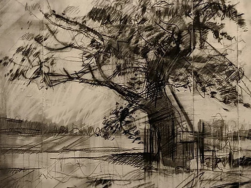 Ketts Oak by Steven Royles