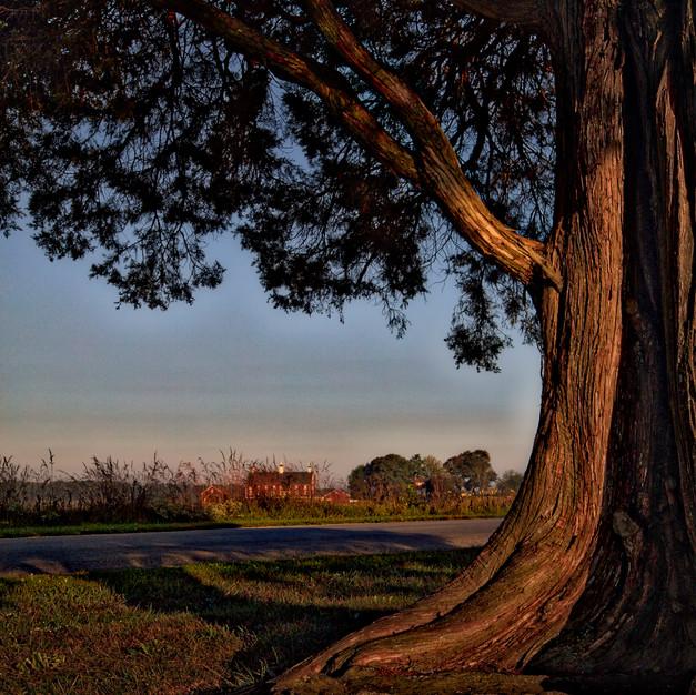 GETTYSBURG TREE