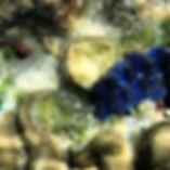 Under the sea! #beautiful #kohrok (This