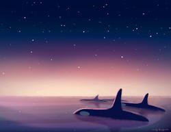 Ballenas en cielo estrellado