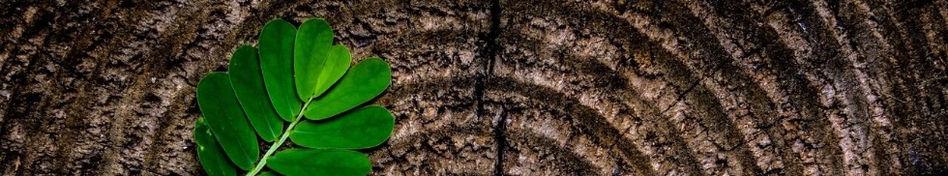 Grünes Blatt auf Holz Biostoffe