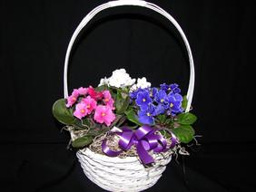 shop-pics-11-8-10-010-800x600.jpg