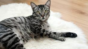 Proč se kočka bojí vysavače?