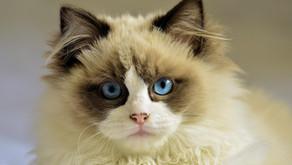 Proč kočka líná?