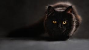 Dokáže kočka rozeznat barvy?
