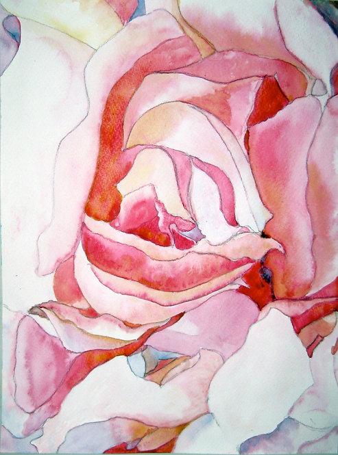 La Rosa / Rose