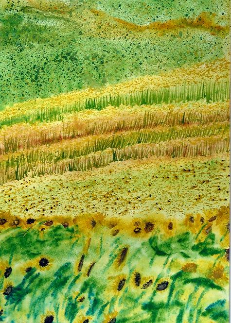 El Prat dels Girasols / Fields of Sunflowers