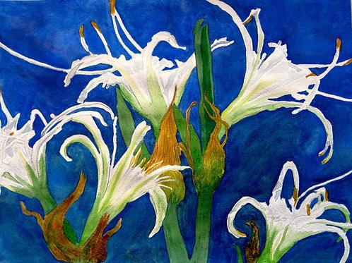 Lliris / Lilies