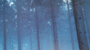 4- La forêt aux Lapis-lazulis