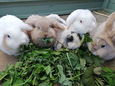 forage bunnies.jpg