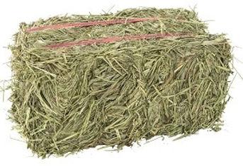 timothy hay.jpg