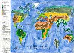 Les différents tapis végétaux