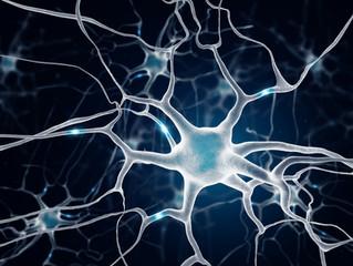 NEUROGENEZA – CBD TWORZY NOWE NEURONY W MÓZGU