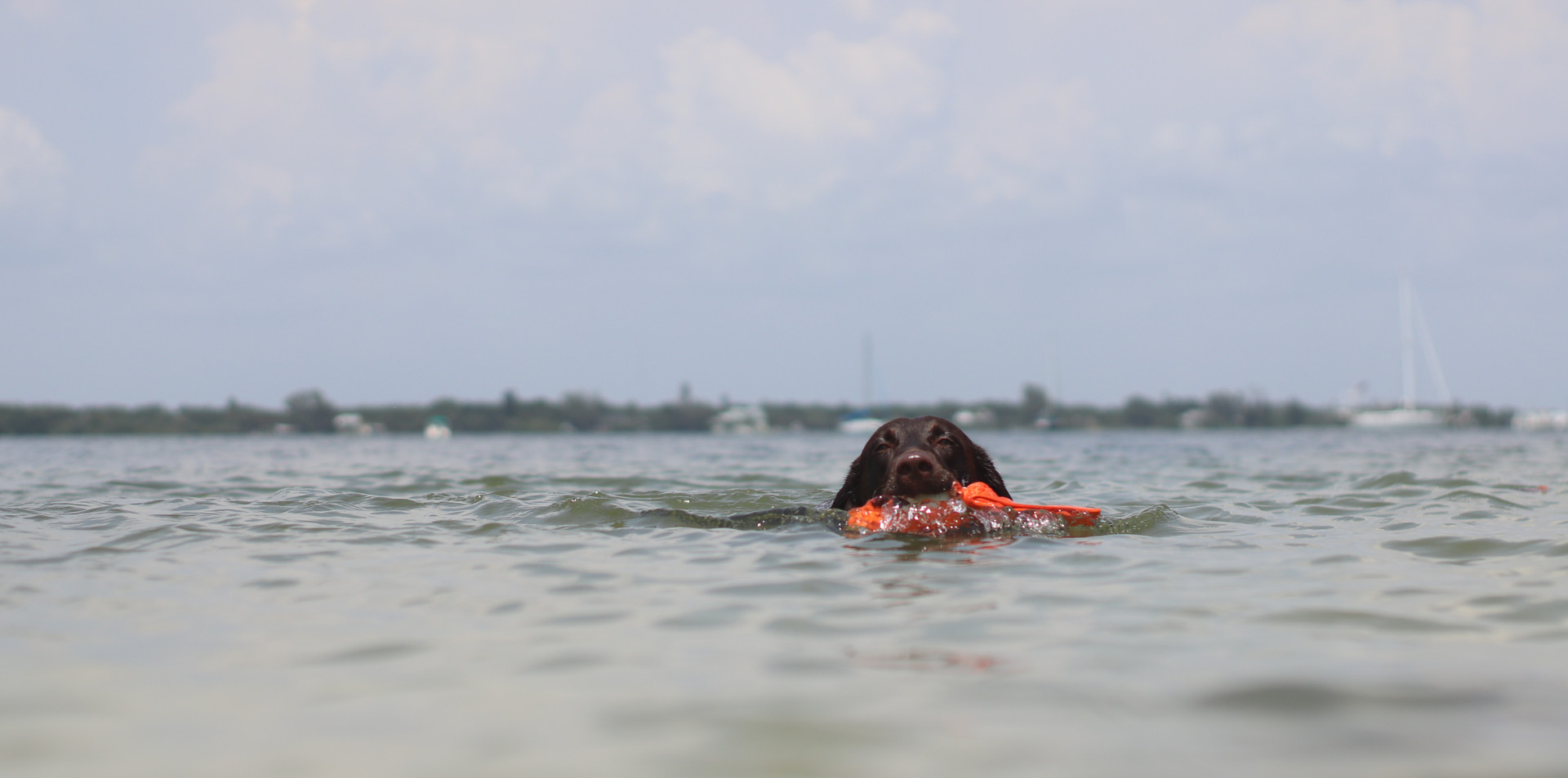 Drex swimming.JPG