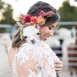alpaca-wedding-