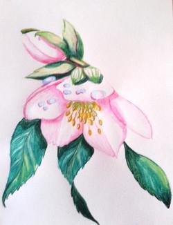 Art-thérapie : crayon aquarellable