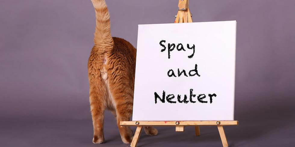 Spay & Neuter Clinics for Cats