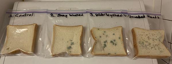 Week 4 Bread.jpg