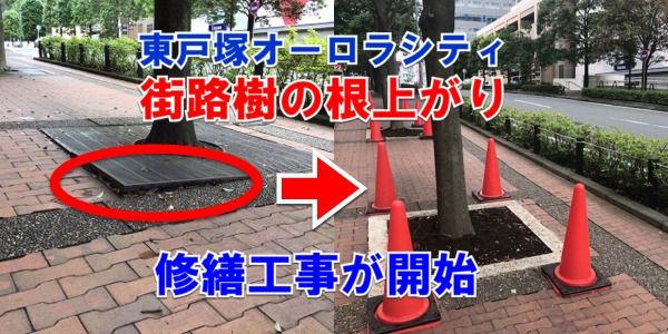 東戸塚オーロラシティ街路樹の根上がり工事開始!