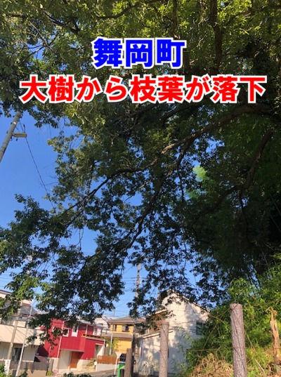 舞岡町の管理不全の大樹から枝葉が落下