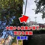 舞岡町・大樹の危険箇所の取り除き・剪定実施