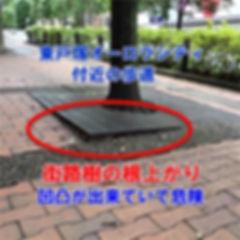東戸塚オーロラシティ付近の歩道  街路樹の根上がり対策で現地視察!