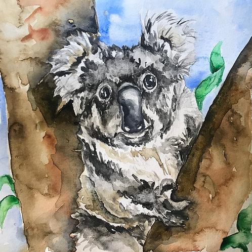 Koala for Australia 8x8 Print