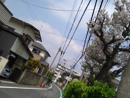 3/30みかじりさんち日誌