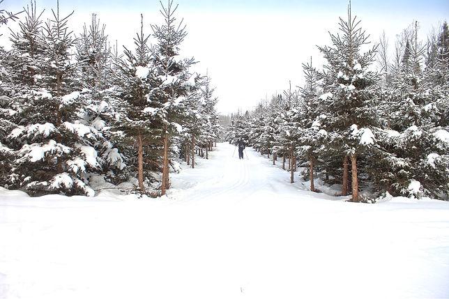Sentier ski de fond