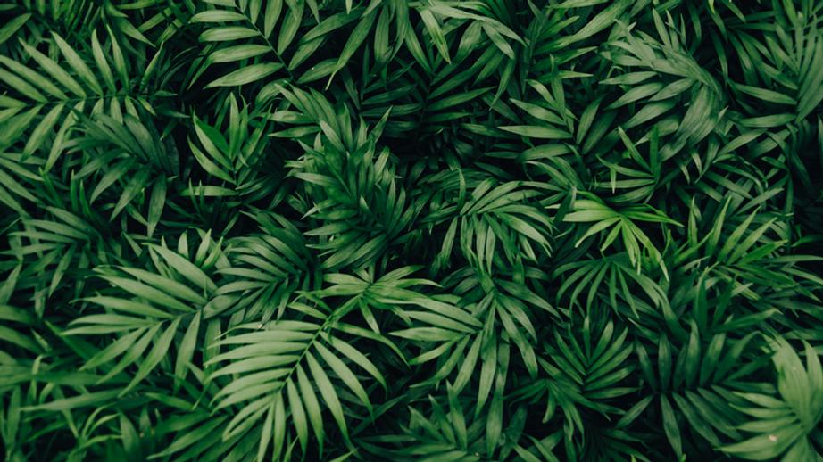 best-zoom-backgrounds-bloomscape-plants-