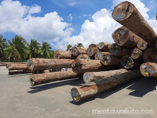 Kembali Terjadi, Sengketa Lahan di Areal HPH PT. SSS di Mentawai