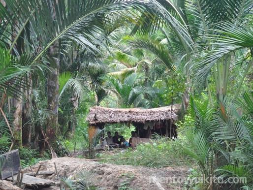 Koalisi Pembela HAM Sumbar Minta KLHK Batalkan Izin Hutan Tanaman Industri di Mentawai