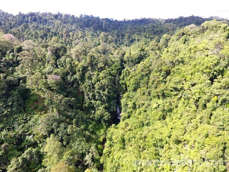 Salah satu kawasan hutan di Pulau Siberut, Mentawai. (Foto: dokumentasi YCMM)