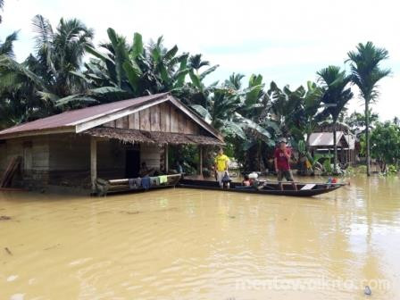 Banjir Pulau Siberut, YCMM Minta KLHK Revisi Kebijakan Kehutanan Mentawai