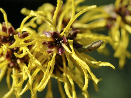 Why everyone should use Witch Hazel