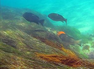 snorkeling_edited.jpg
