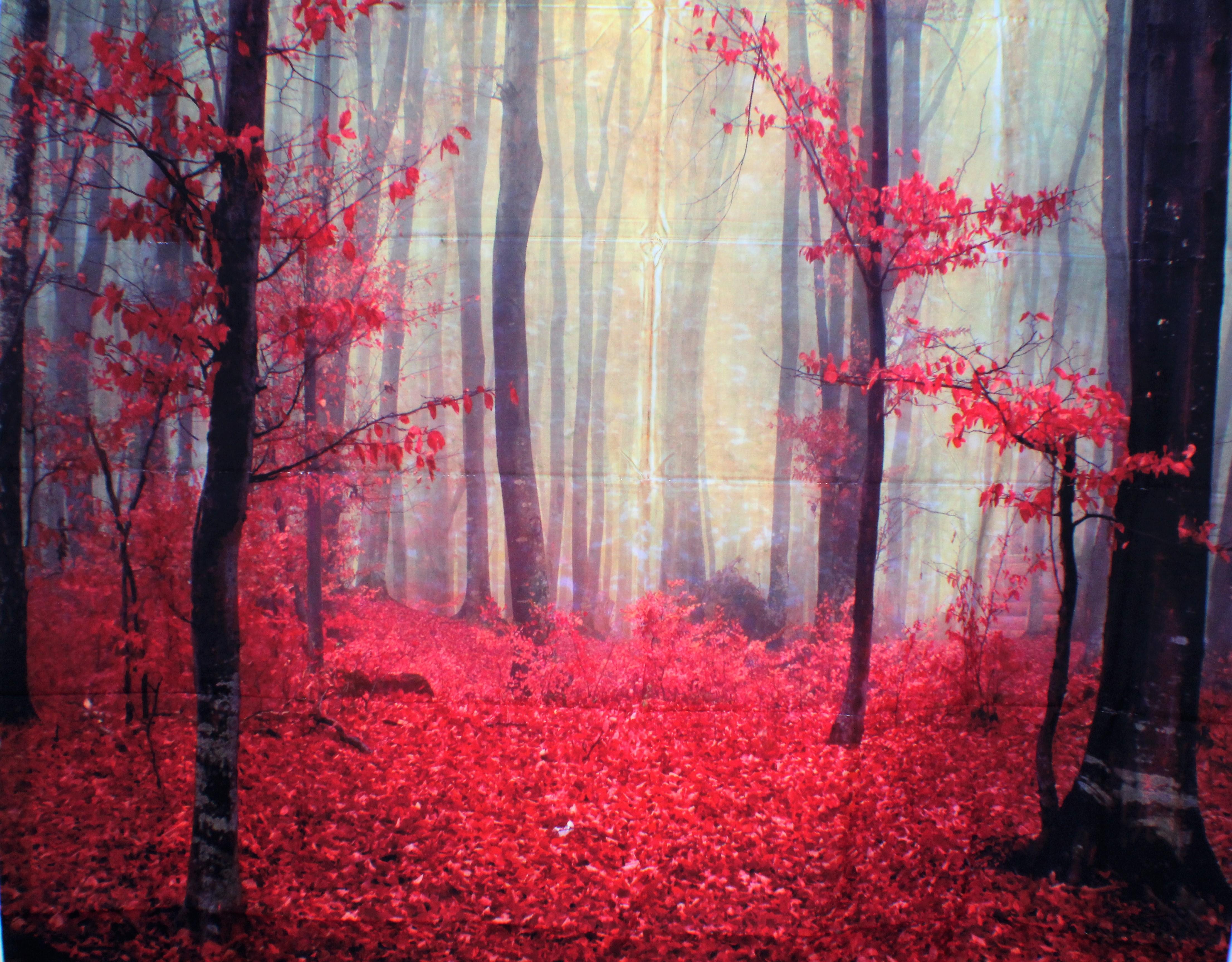 28 Red Autumn