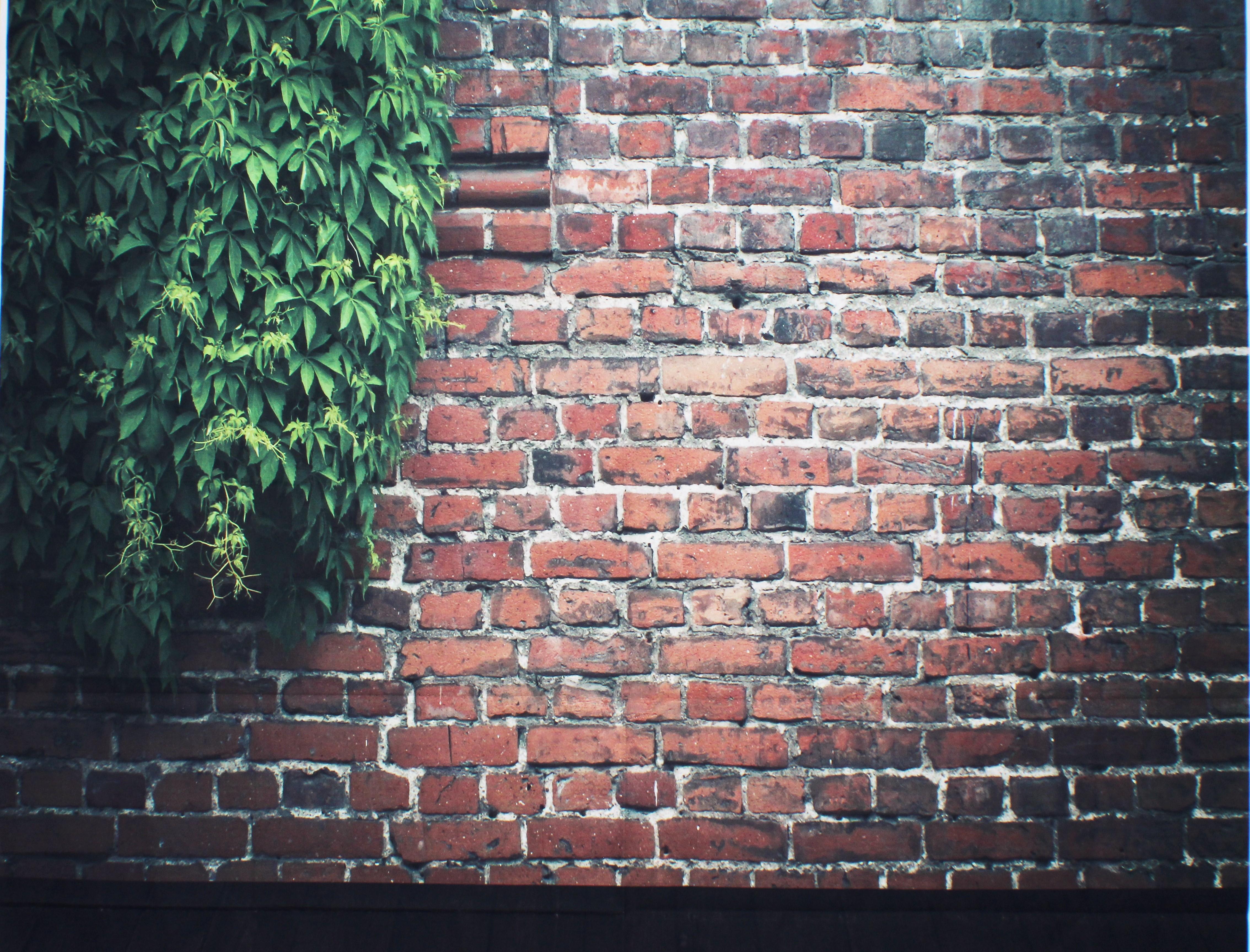 15 Brick with vine