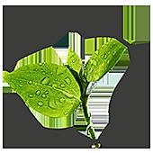 biomasa ecologica cambio climatico pellet leña hueso d aceituna aprovechamiento agrícola