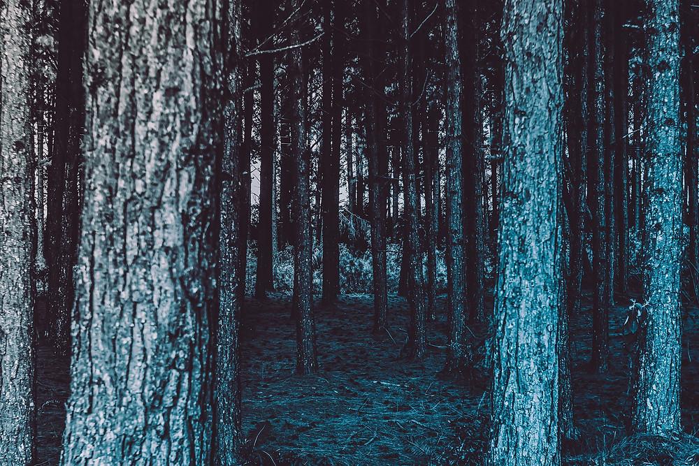Paljon puunrunkoja pimeässä metsässä