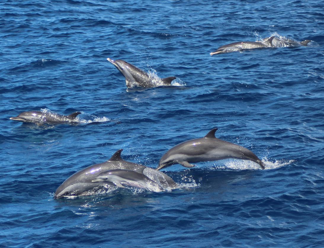 Voyagez avec les dauphins