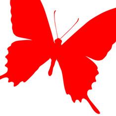 CONTACT Jugendberatung Schmetterling.jpg
