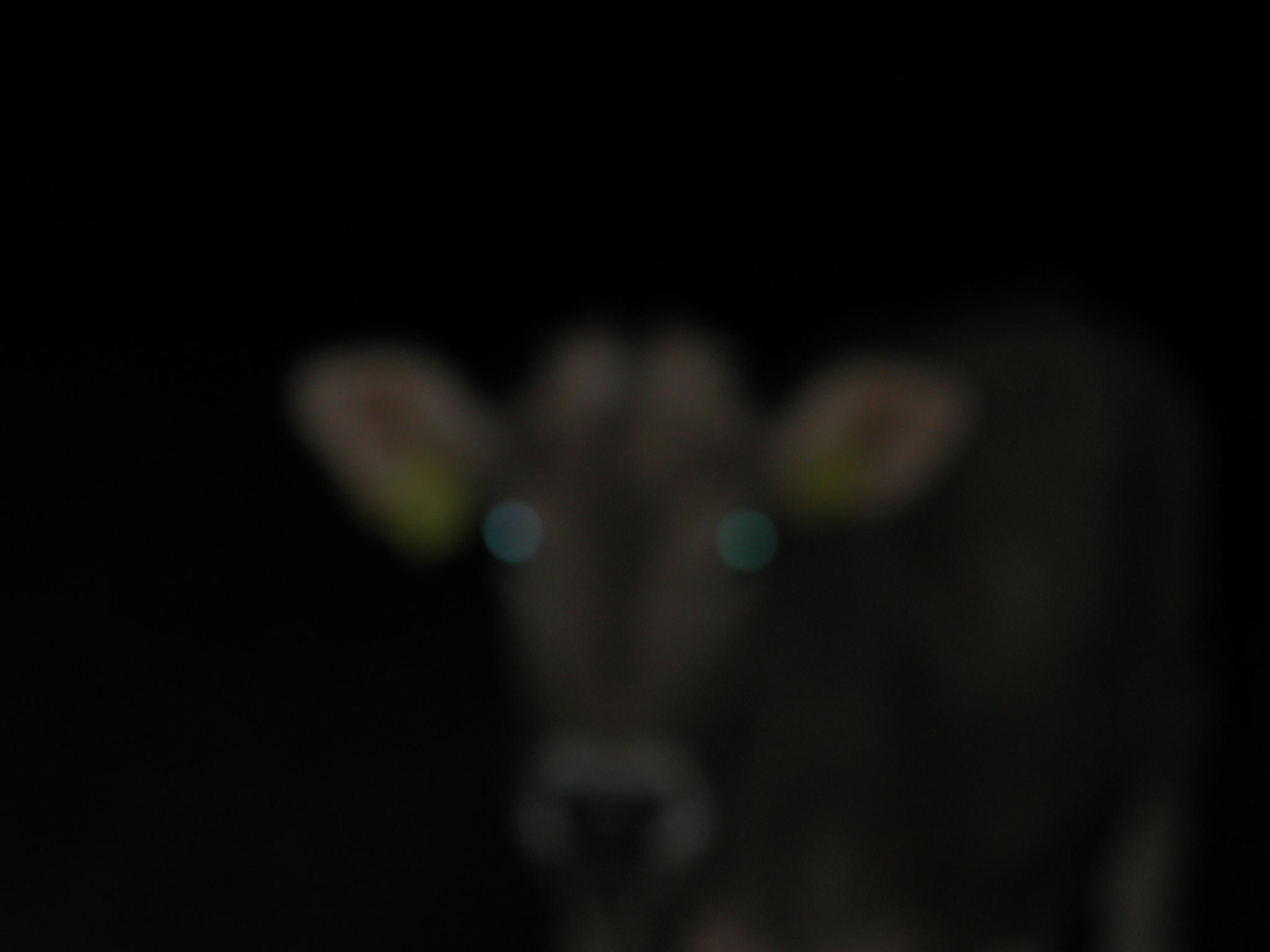 cowgeist